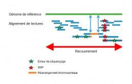 Fig2 : Reséquençage d'un génome pour la détection de variations génétiques