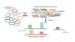 Fig1. Métagénomique ciblée sur le gène codant l'ARNr 16S