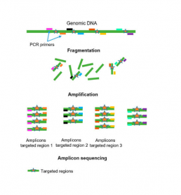 Fig1 : Sequencing by PCR amplification of DNA fragments of interest