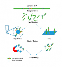 Fig2 : Sequencing by enrichment of DNA fragments of interest