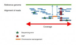 Fig2 : Alignment of reads with a reference sequence for the detection of genetic variations