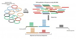 Fig1. Metagenomics targeted on the gene encoding 16S rRNA