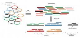 Fig1. Shotgun metagenomics